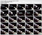 http://img7.imagevenue.com/loc450/th_29308_Hiddencamunderdesk.Spyingonwife.flv_thumbs_2012.05.30_02.31.45_123_450lo.jpg